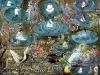 ayahuasca-visions_018.jpg